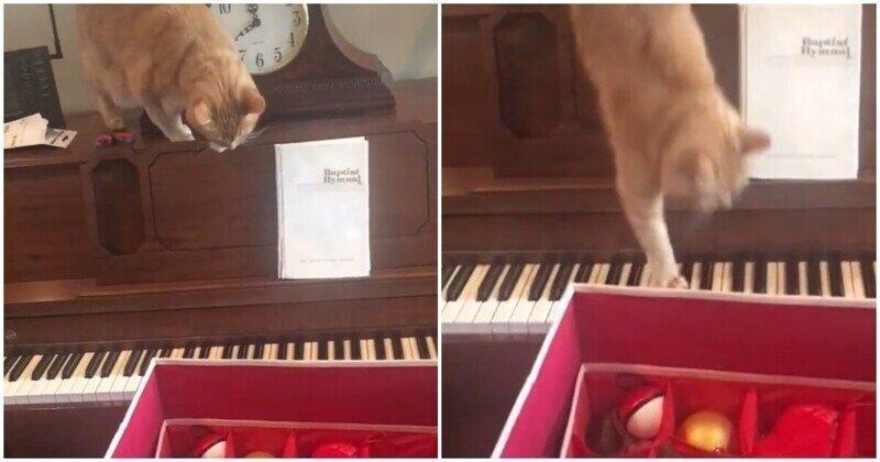 Кот решил слезть с пианино и пожалел об этом