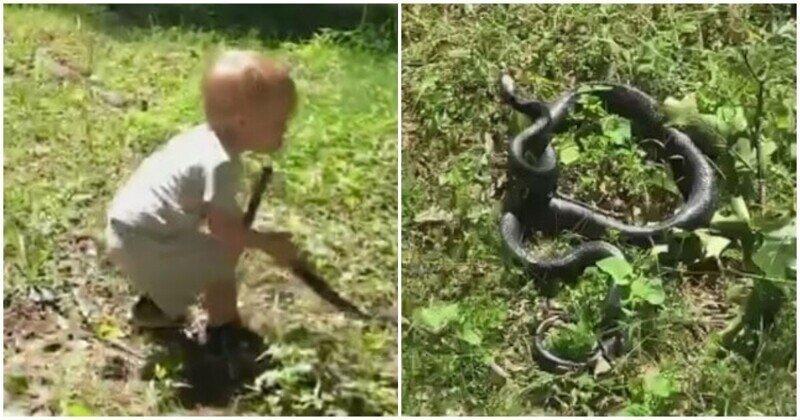 Мальчик случайно бросил собаке змею вместо палки