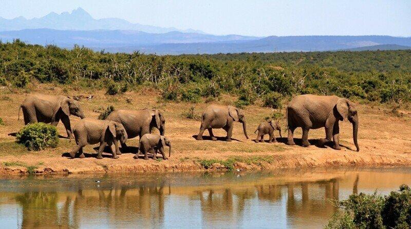 В Ботсване по неизвестной причине гибнут сотни слонов