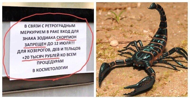В московской клинике невзлюбили Скорпионов