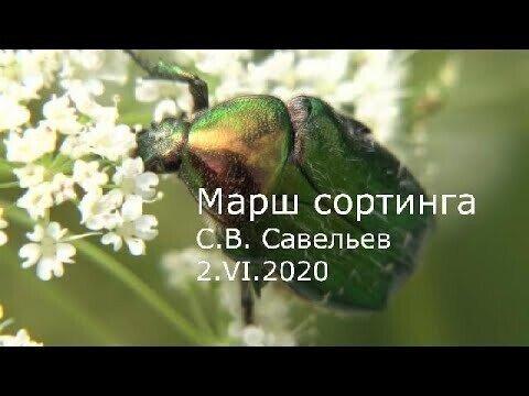 С.В. Савельев - Марш сортинга