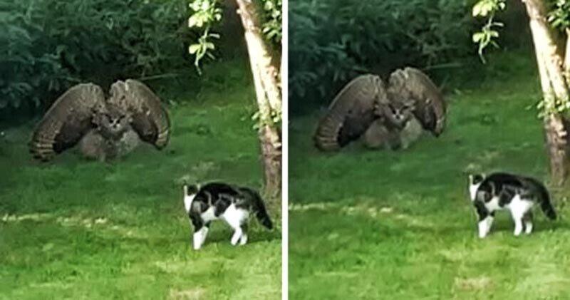 Сова напугала кошку своим видом