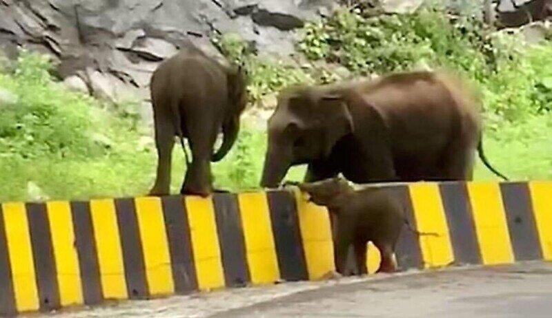 Слониха протянула хобот помощи своему детёнышу