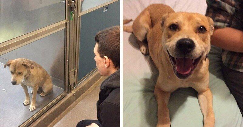 Котики и собаки до и после того, как их забрали из приюта