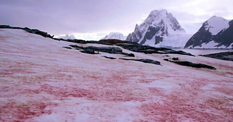 Чем опасен малиновый снег, выпавший в Альпах