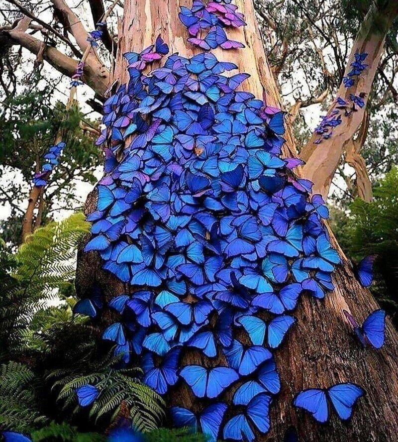 Природа удивительна: усеянное голубыми бабочками дерево в лесу