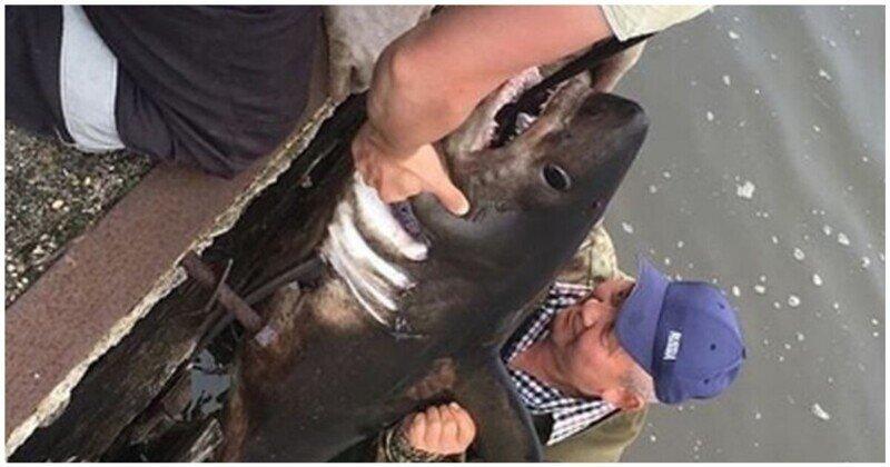 В Красногорске рыбаки поймали в реке акулу
