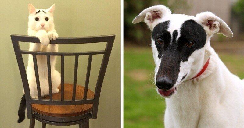 15 кошек и собак с уникальным окрасом