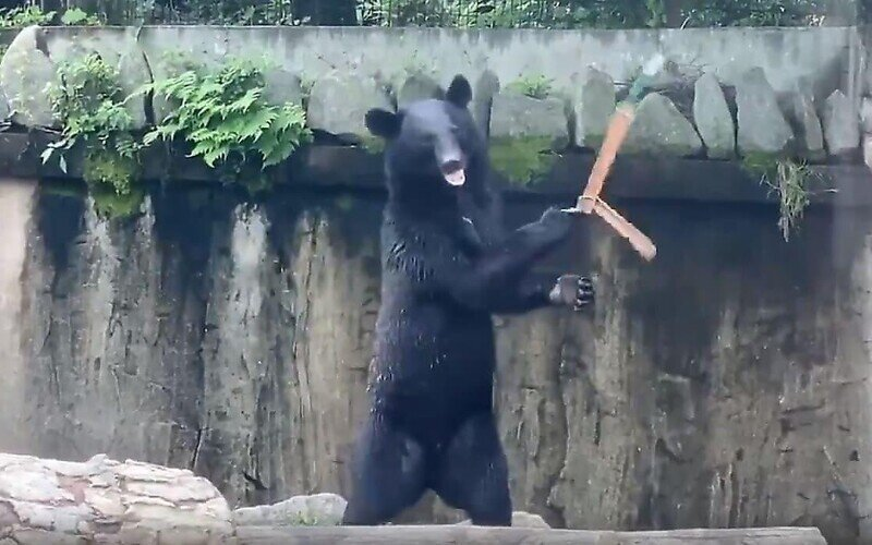 Медведь с нунчаками, который может стать новым мемом