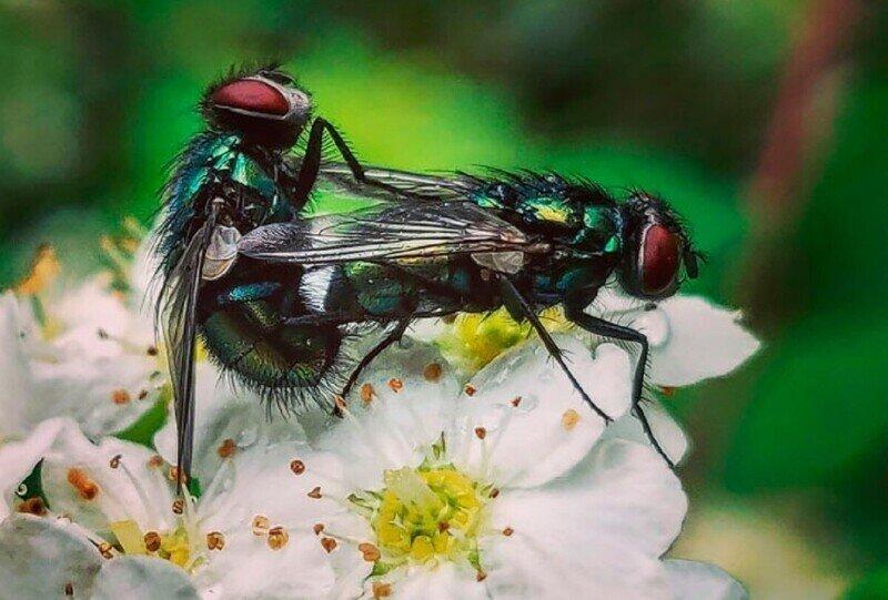 И жуки любить умеют