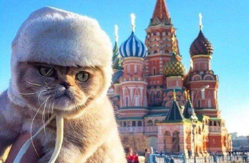 Россия - родина кошек