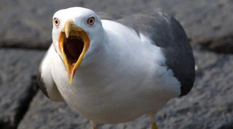 Мужчину арестовали за то, что он покусал чайку
