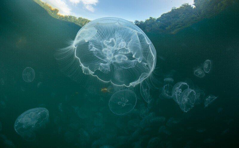 Индонезия: залив медуз, Раджа-Ампат