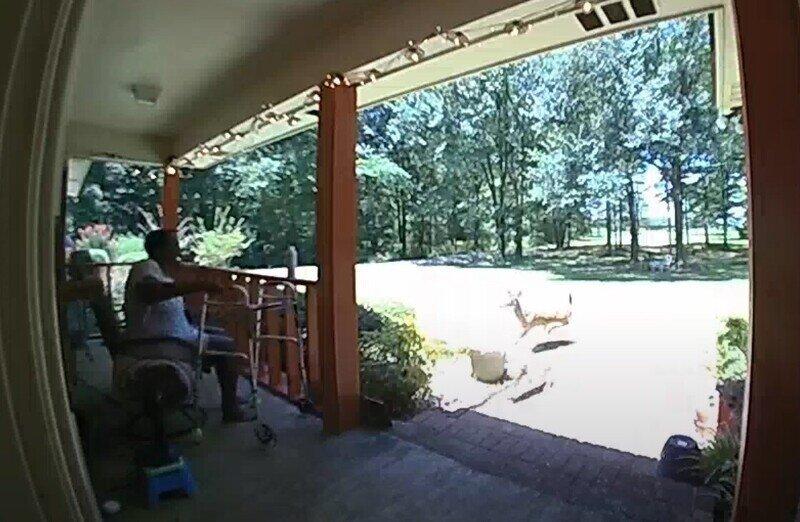Пустившийся в погоню за псом олень протаранил стеклянную дверь