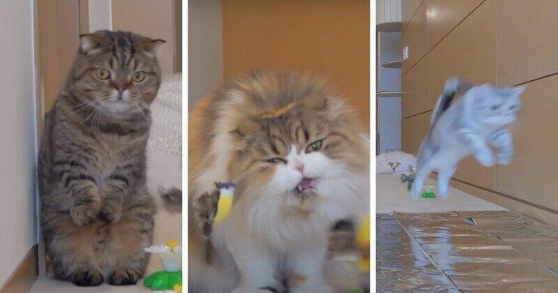 Владелица котов устроила своим питомцам полосу препятствий