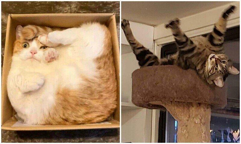 """""""Что не так с моим котом?"""": 35 котеек, которые внезапно сломались"""