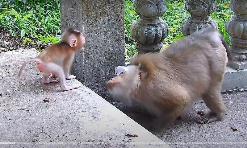 Обезьяна продемонстрировала детёнышу свою материнскую любовь  с помощью взгляда