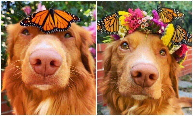 Майло - чудо-пес, который дружит с бабочками