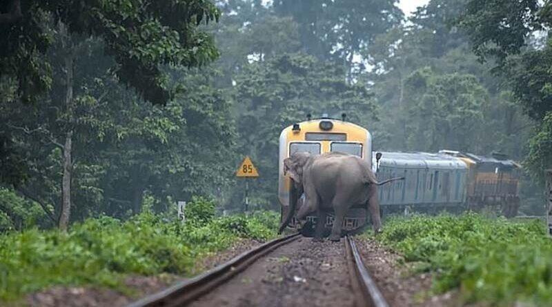 Слоны переходят железную дорогу за мгновение до того, как проехал поезд