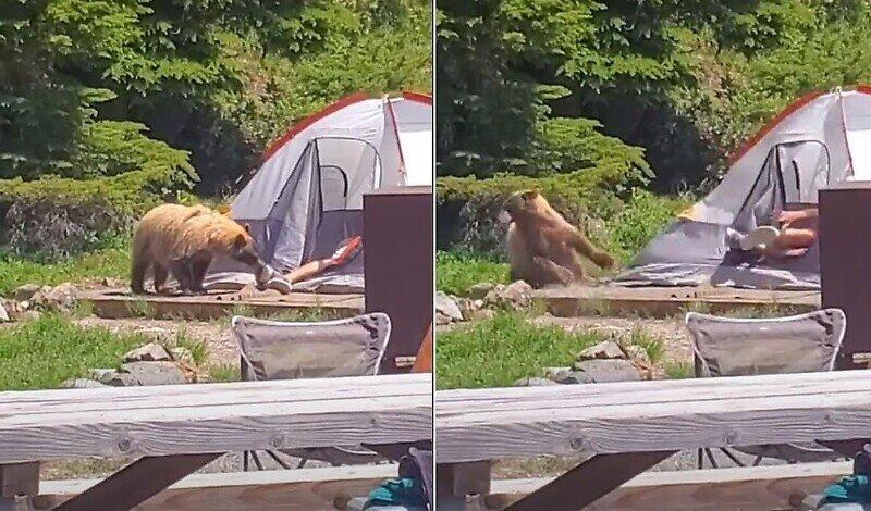 Любопытного медведя заинтересовала обувь спящего туриста