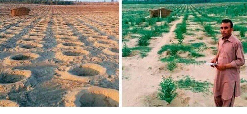 Пакистан накрыло цунами в 10 миллиардов деревьев