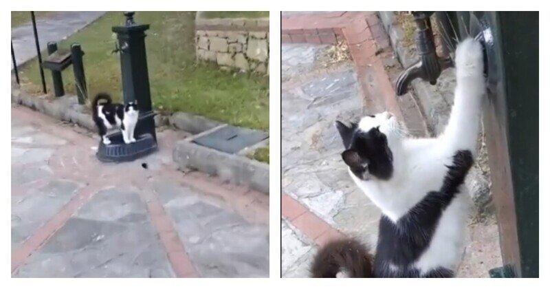 Незнакомец помог котику утолить жажду
