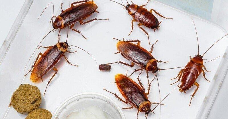 Топ-6 существ, которые могли бы пережить Апокалипсис