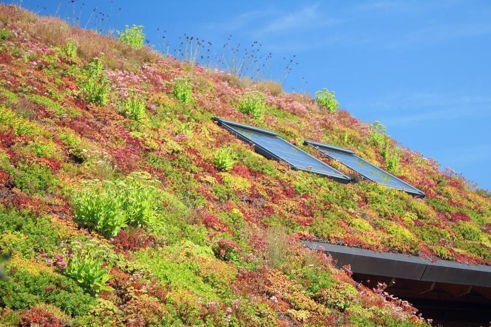 Почему в Южной Корее часто встречаются зеленые крыши?