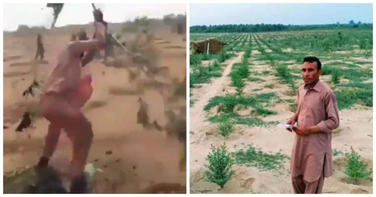 В Пакистане местные уничтожили 6 тысяч деревьев, высаженных в рамках экологической программы