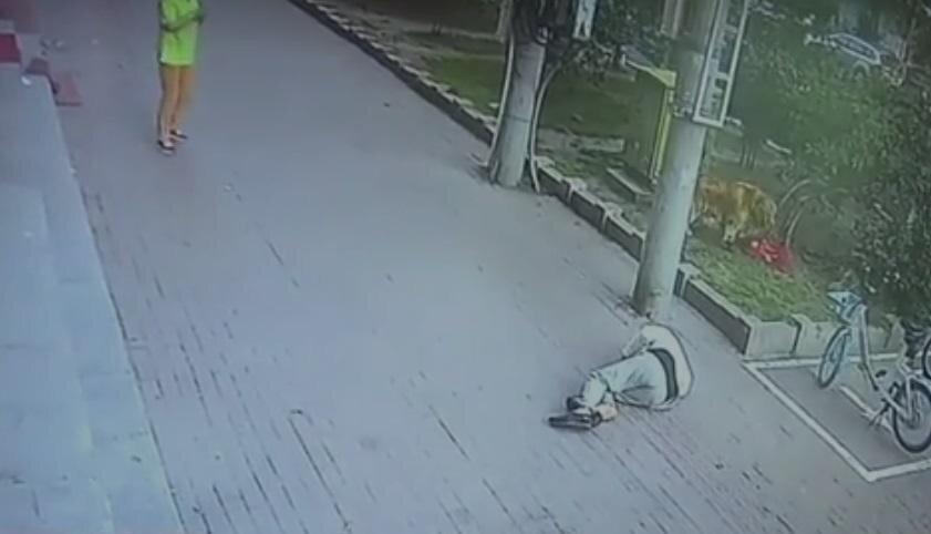 Пенсионер лишился чувств ощутив на себе внезапный удар кошкой: видео