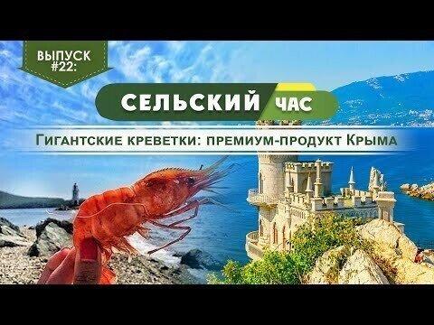 Гигантские креветки: премиум-продукт Крыма. Сельский час #22 (Игорь Абакумов)