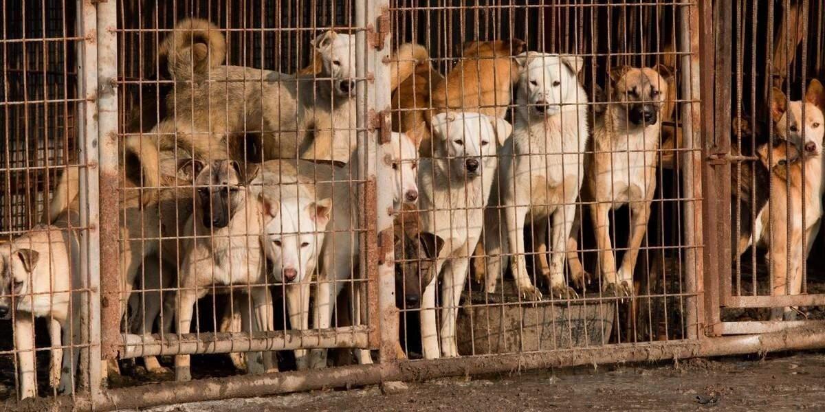 Ким Чен Ын запретил жителям КНДР держать дома собак