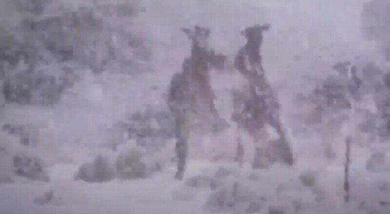 Кенгуру-драчуны не могут остановиться несмотря на сильный снегопад, пришедший в Австралию