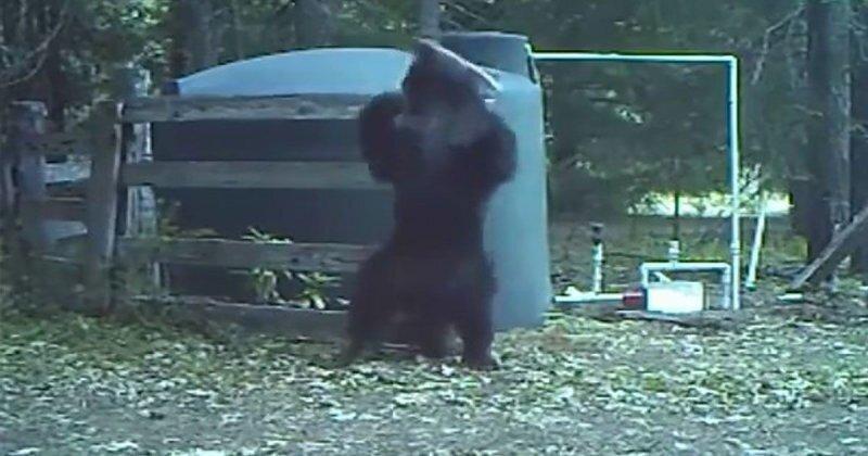 Молодой медведь впервые узнал, что такое боль