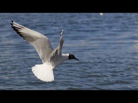 Ты думаешь чайка утонет под водой?