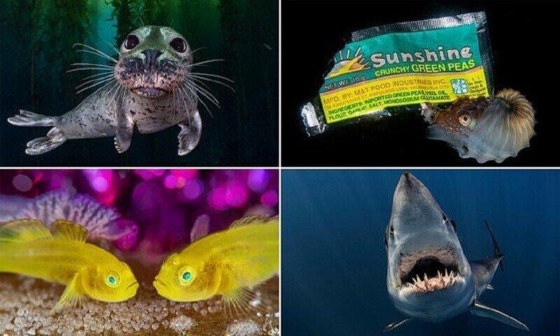 Конкурс подводной фотографии объявил победителей