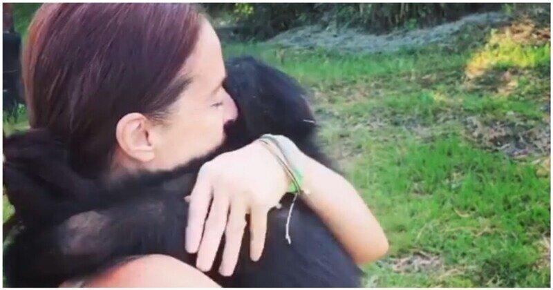 Встреча шимпанзе со своим опекуном после долгой разлуки