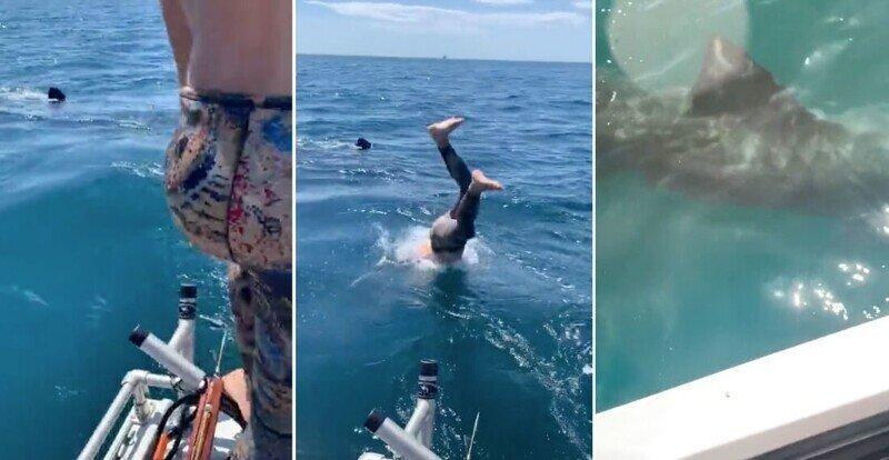 Мужчина решил поплавать рядом с акулой и чуть не пожалел об этом