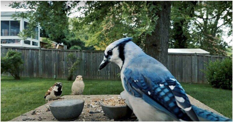 Нешуточная битва птиц и белок за семена