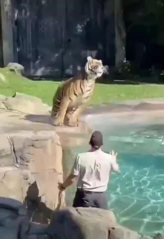 Кошка и в Африке - кошка )