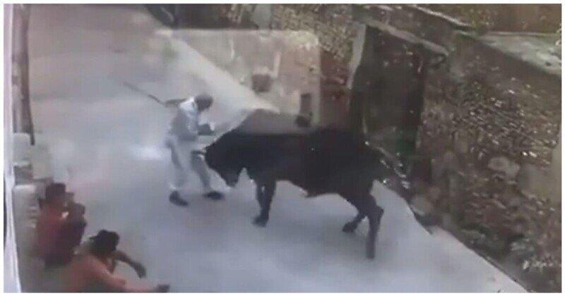 Бык атаковал ударившего его старика