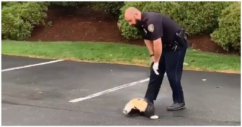 Полицейский спас любопытного скунса, застрявшего головой в стаканчике