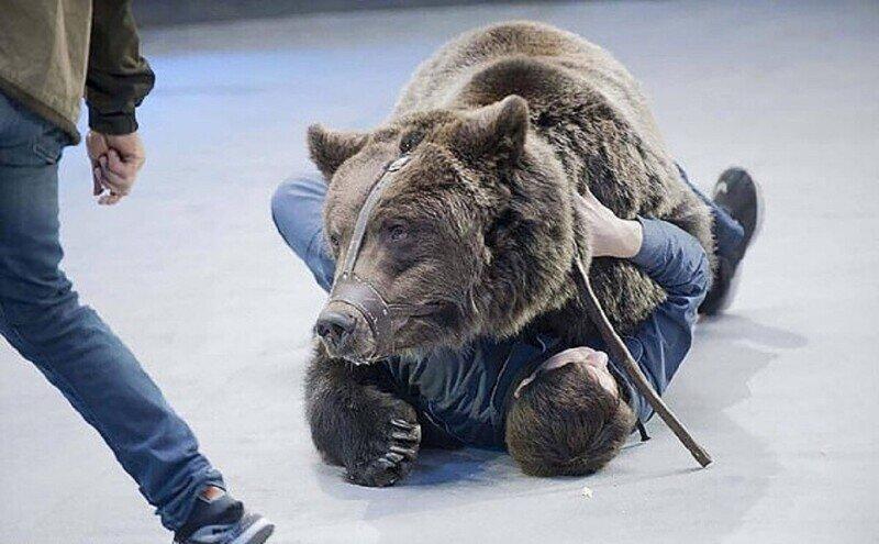Уборщика в московском цирке задрал медведь
