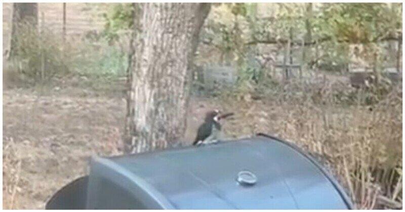 Птица решила сделать запасы на зиму в необычном месте