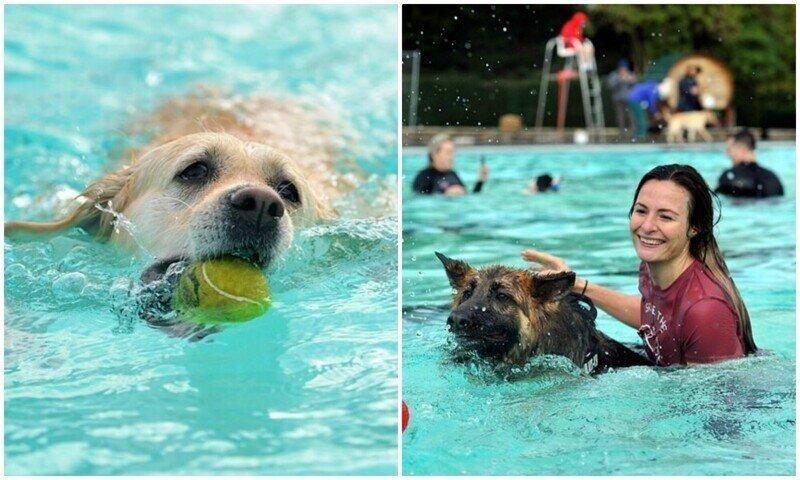 В Англии 800 собак закрыли купальный сезон