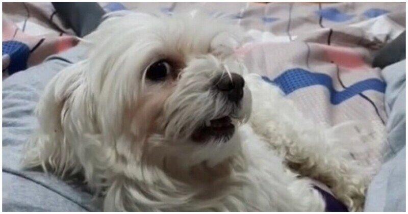 Пёс против назойливого тиктокера