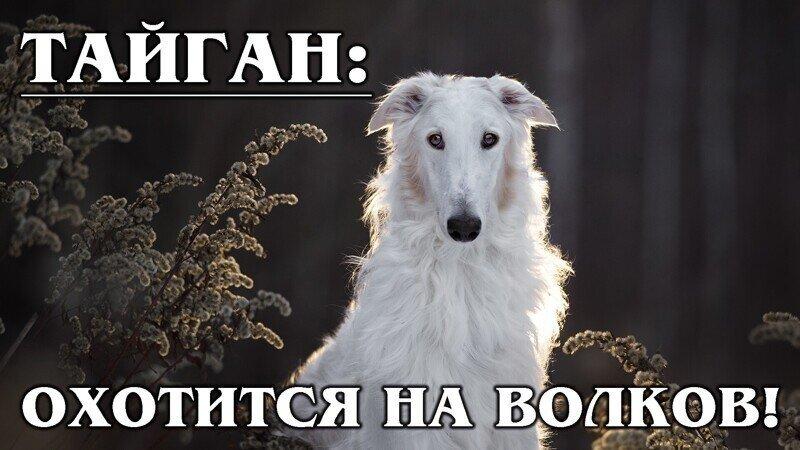 Факты о собаках