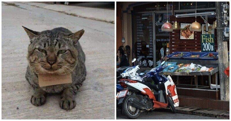 Котик из Таиланда вернулся домой с долгами
