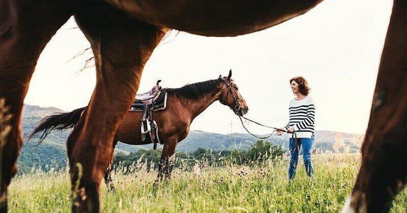 Новое исследование: лошади НЕ привязываются к своим хозяевам