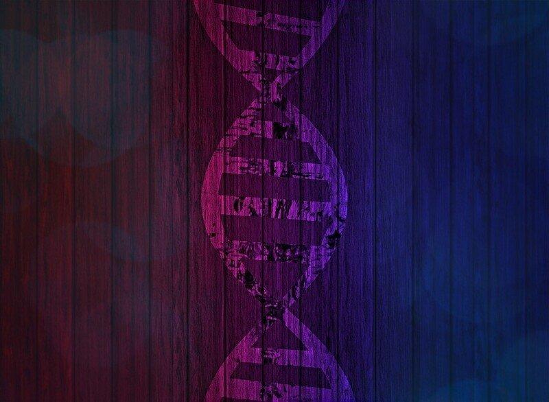 Что такое ДНК человека